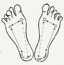 lábfej ízület