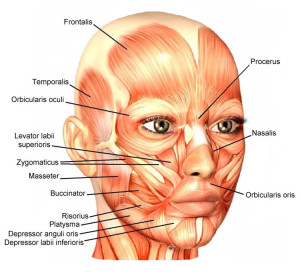 Facial-Muscles.jpg nő