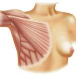 img-chest-anatomy